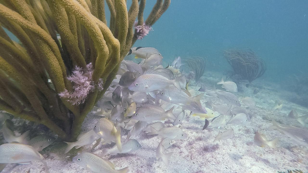 Holbox Fischschwarm