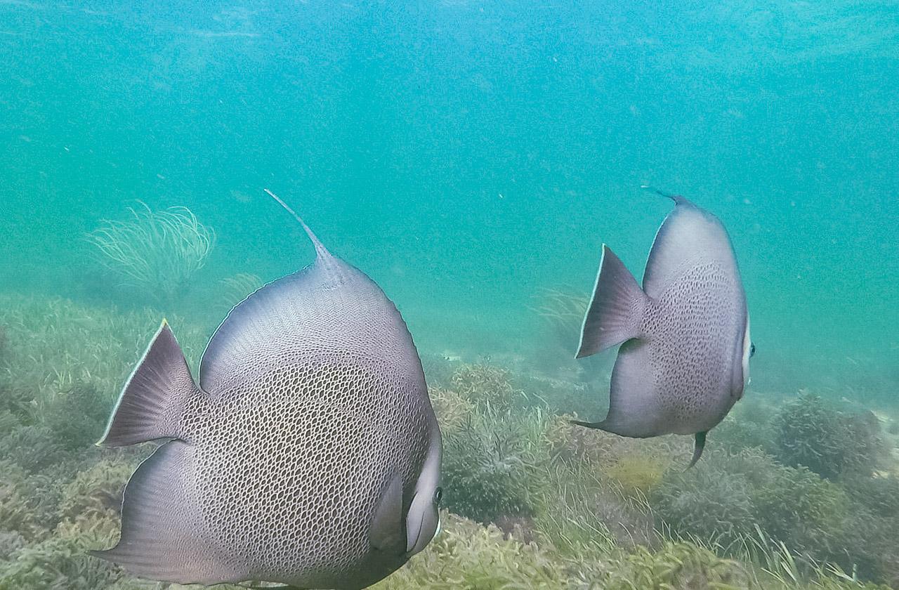 Holbox Fische