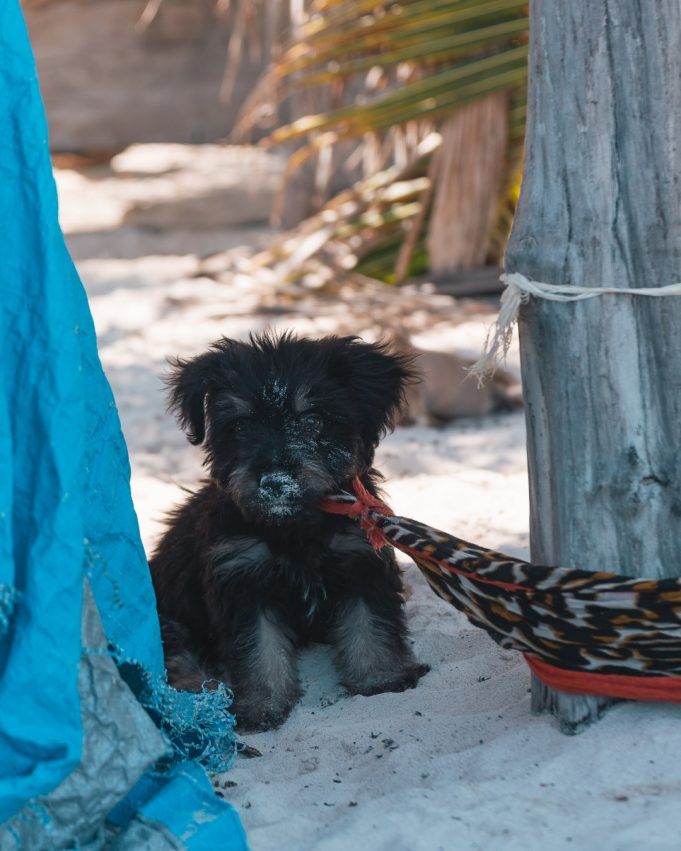 Tulum Strand Hund