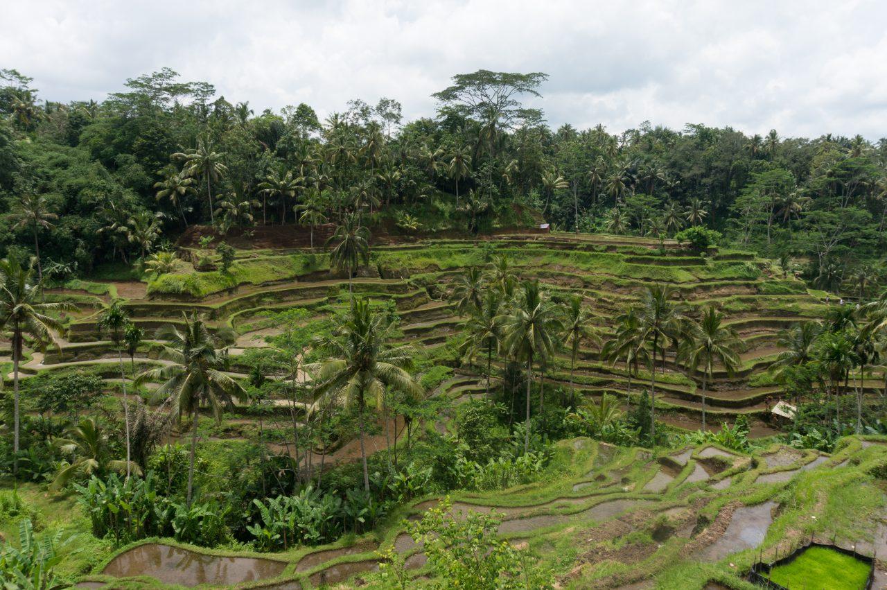 Bali-97