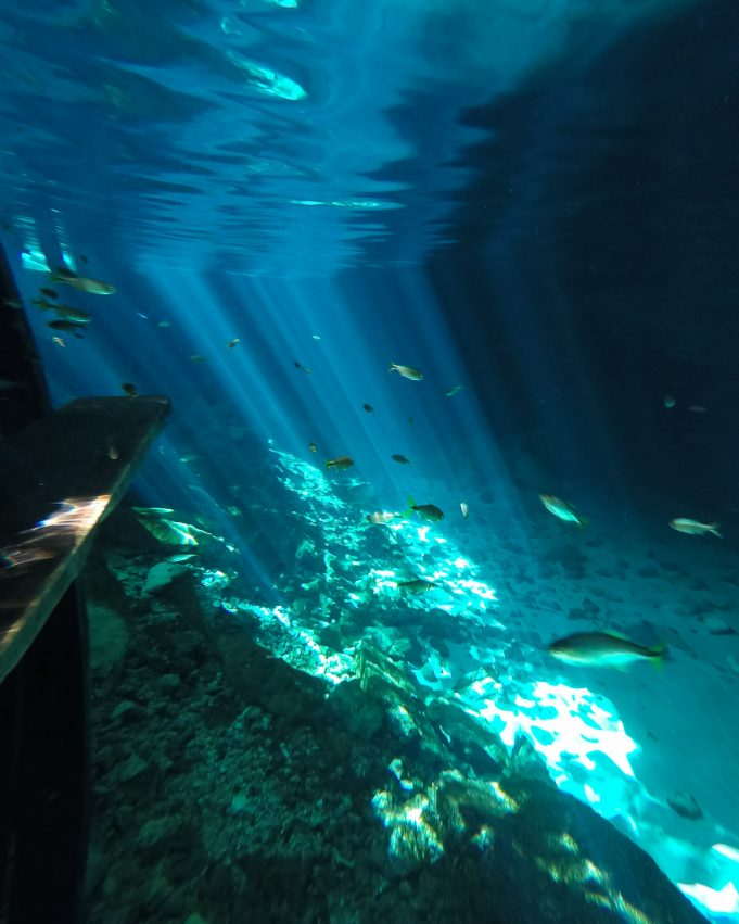 Tulum Cenote Fische
