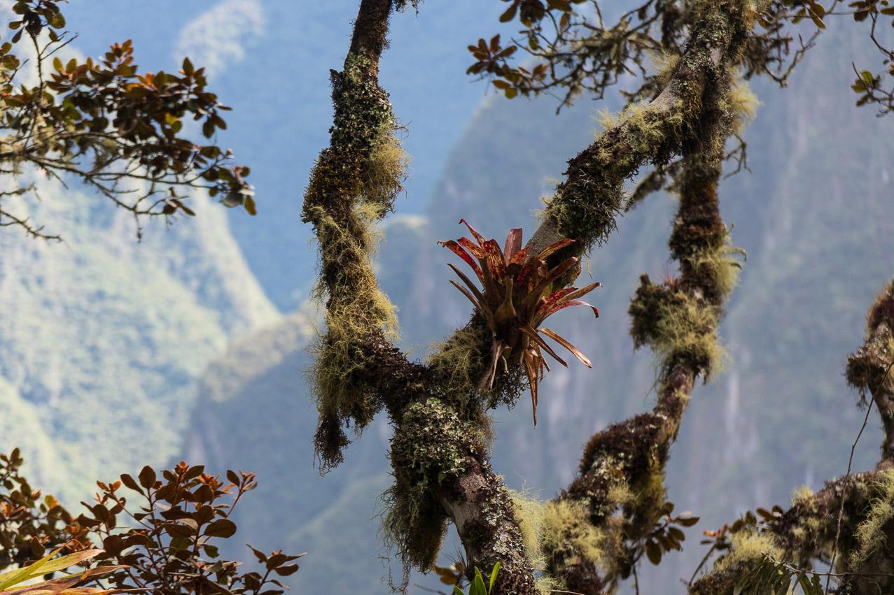 Machu Picchu-07332