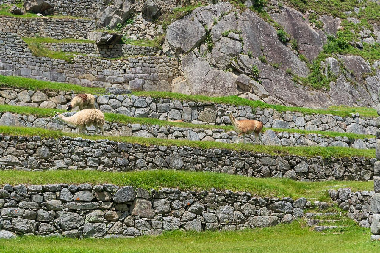 Machu Picchu-07347