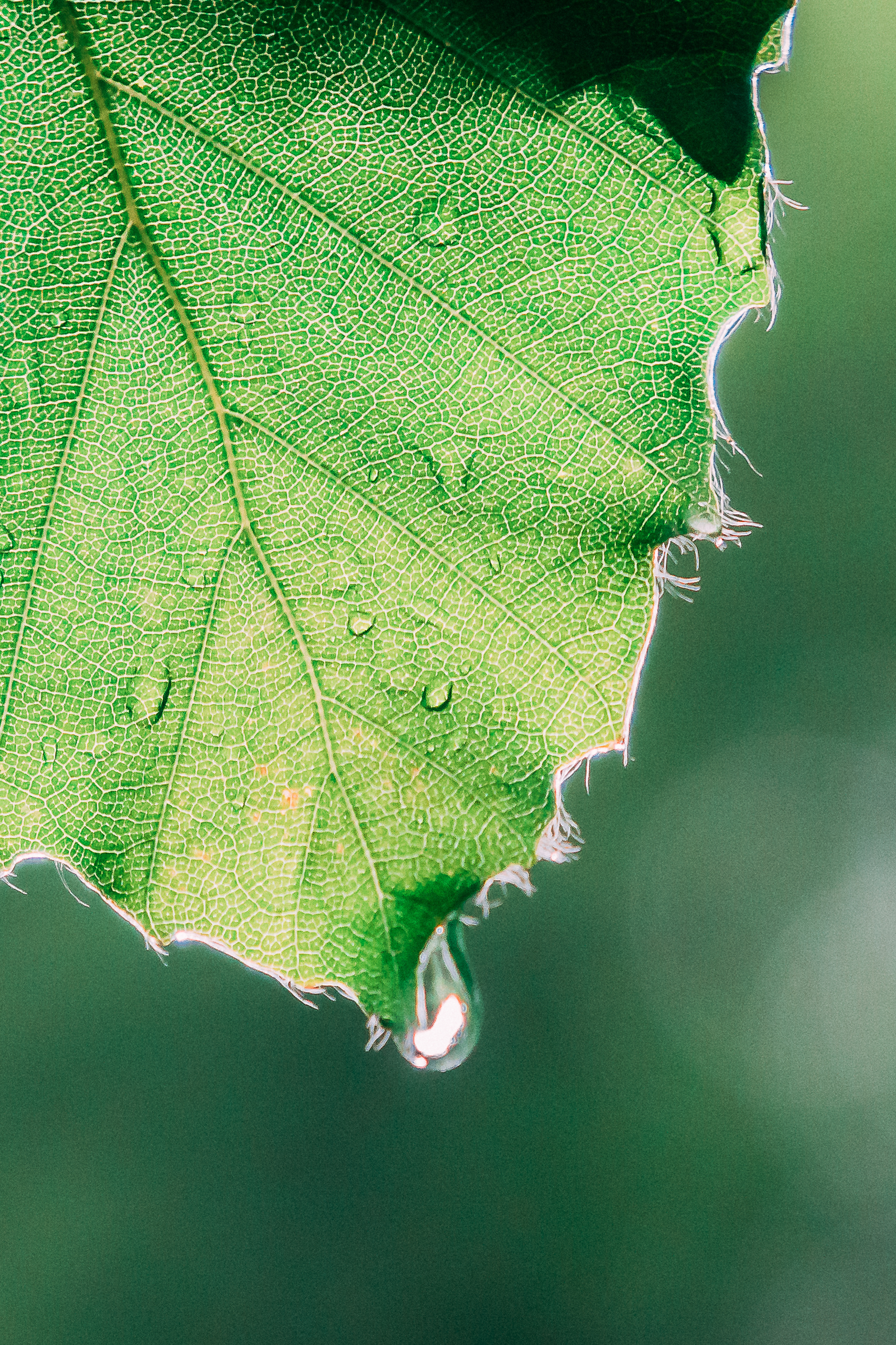 Blatt Detail