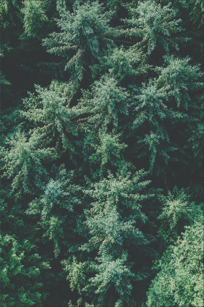 Wald von oben Softproof