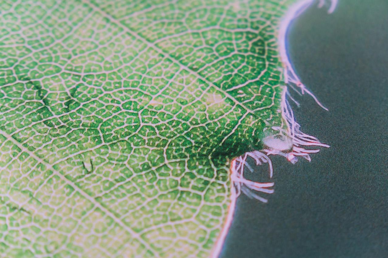 Saal Digital Wandbild Detail