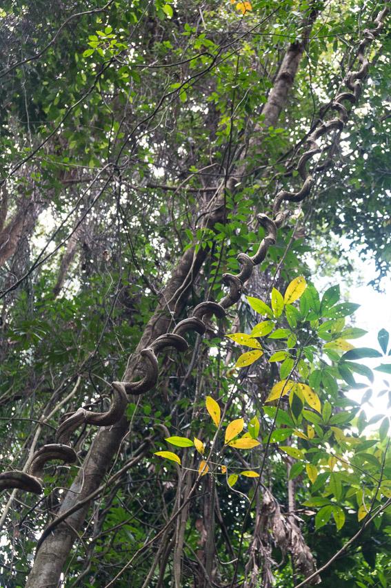 Singapur Regenwald