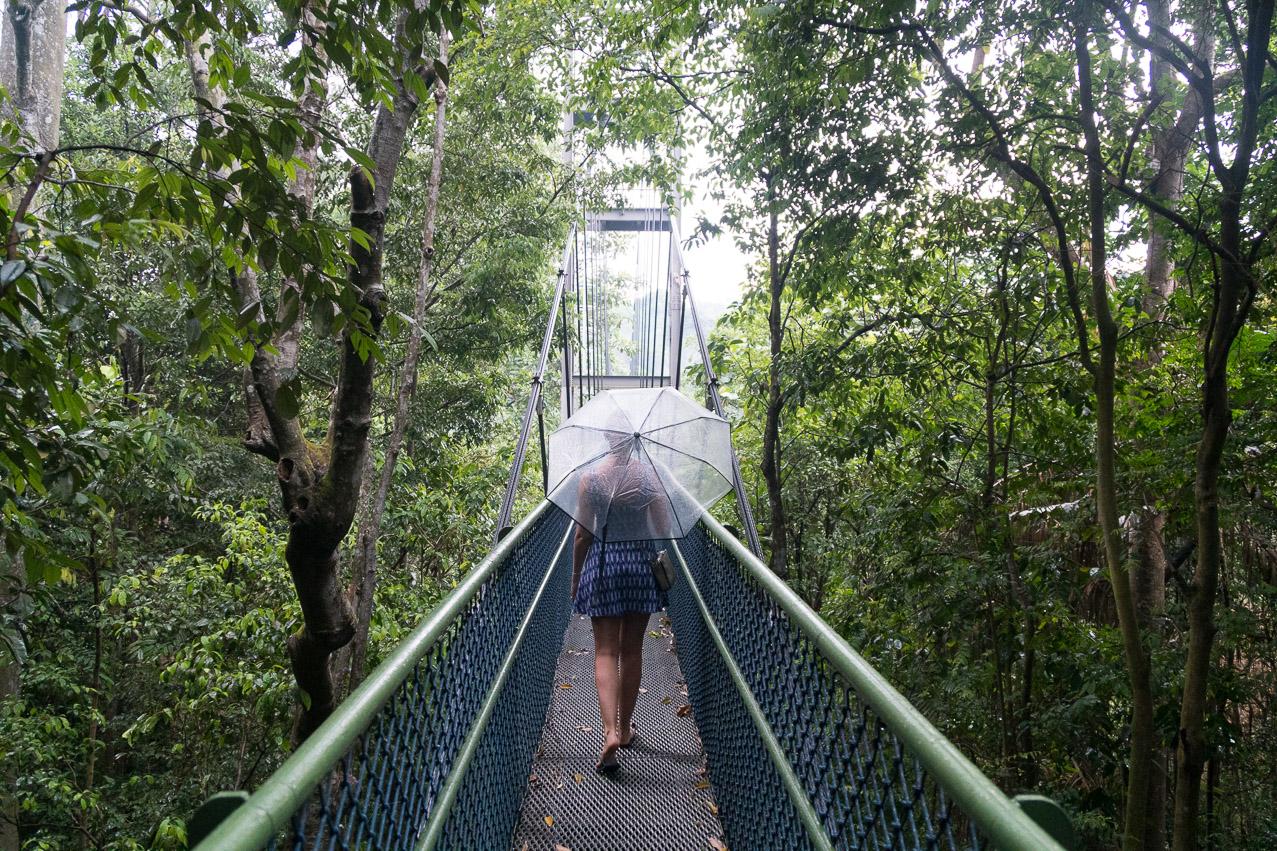 Singapur Regenwald Brücke